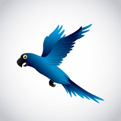 blue macaw design