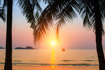 Sunset on a tropical beach, the silhouettes of the palm leaves.