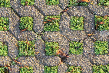 Green grass and concrete