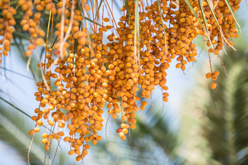 Date palm and blue sky on the background.