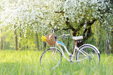 spend a weekend in nature/retro bicycle picnic under a blossoming tree in the Spring
