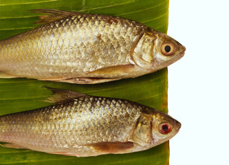Freshwater fish  with green banana leaf.