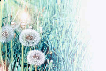 Summer landscape. Flowers.