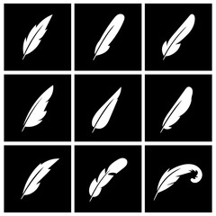 Wall Mural - Vector feather on black background