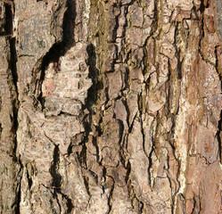alte Rinde, Baum