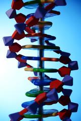 Modell einer DNA Doppelhelix für Genetik oder Gentechnik