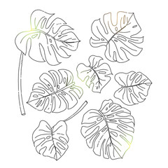 Set of a few monstera leaves in black colors. Hand drawn design elements. Vector isolated. Line drawing.