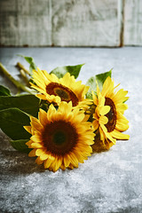 Cut sunflowers on a wooden background
