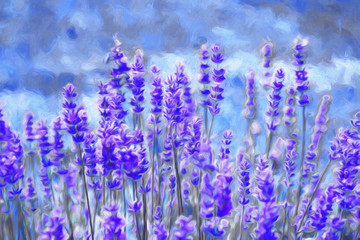 Lavender field. Oil painting
