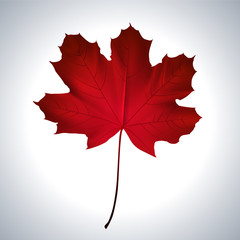 Red maple leaf as an autumn symbol