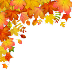 Colorful autumn maple leaves frame, vector illustration