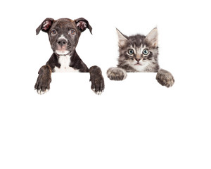 Wall Mural - Cute Puppy And Kitten Hanging Over White Banner