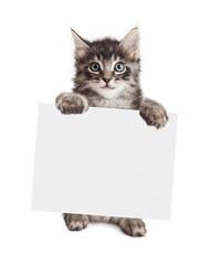 Fototapete - Smiling Kitten Holding Blank Sign