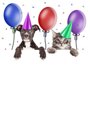 Fototapete - Party Kitten and Puppy Hanging Over Blank Banner