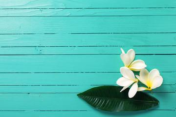 White tropical plumeria flowers