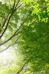 緑の木々, エコロジーイメージ