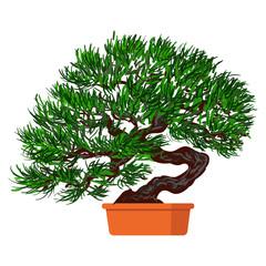 Vector illustration plant in pot. Bonsai dwarf tree.