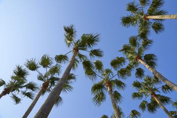 青空に向かって伸びる木