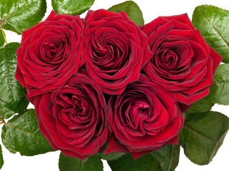 Five red roses isolated on white background