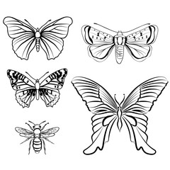 Butterfly set. Insect doodle sketch collection.