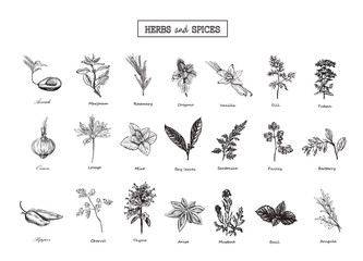 Set of Herbs and spices in sketch style. Vector illustration for