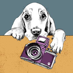 The poster with a portrait of the dog Basset Hound with the camera. Vector illustration.