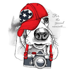 The poster with the image of the dog Basset Hound with the camera. Vector illustration.