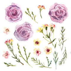 Flowers painted with watercolors on white background. Small flowers, wedding decor. Watercolor flowers.