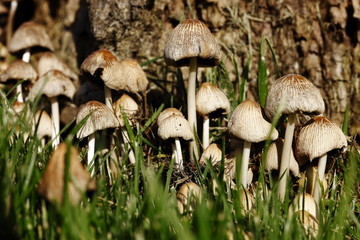 fungus - Stock Image