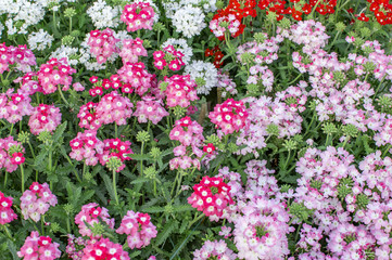 Pink red flowers on green plants