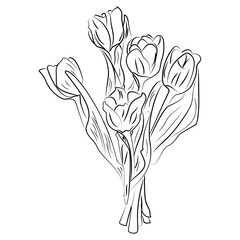 Vector black and white ink sketch tulips