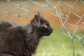 Black cat (female cat)cat close up