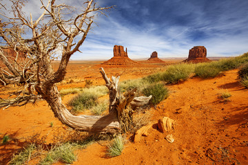 dead tree trunk in the monument valley