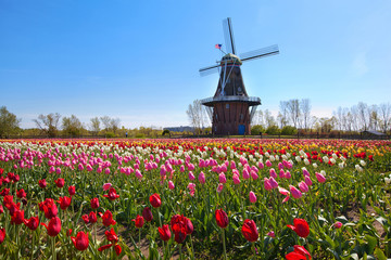 Wooden Windmill in Holland Michigan - Surrounded by spring tulips Wall mural