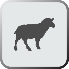Graphical flat icon, button of sheep. Vector.