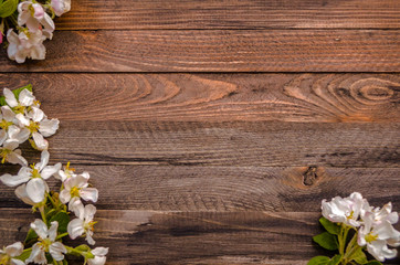 Blossoming apple tree on a wooden background, Black  template