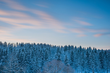 Fir tree forest landscape and blur clouds in sunset sky at snow
