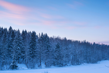 Forest landscape and blur clouds in sunset sky at snow winter se