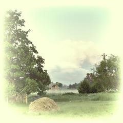 Summer on the farm