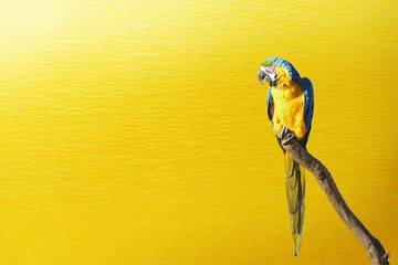 Portrait of a parrot on yellow background.