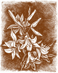 Lilies of the valley flower. Vintage engrave illustration. Lily flower vector illustration in eps.