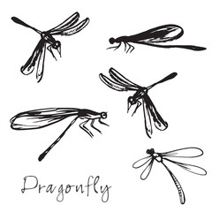 Set of different hand drawn dragonflies
