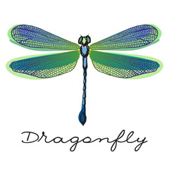 Hand drawn colorful  dragonfly with doodle drawn wings