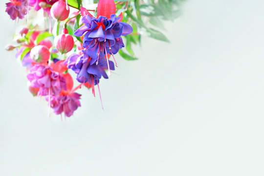 Kolorowe kwiaty w promieniach światła i puste miejsce dla tekstu