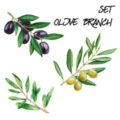 Set with olive branches. isolated. watercolor