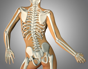 3d render of a back woman body and skeleton