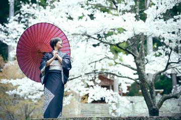 着物姿の美人女性 満開の桜 季節 女性 素材