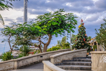 Trees and christmas tree in Tenerife, Spain