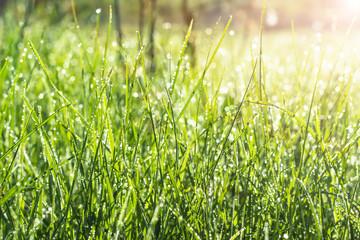 Beautiful view on cute backyard in sunny day, fresh green grass lawn in sunlight, landscaping in the garden, beauty of summer season