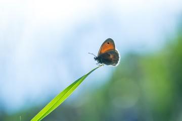 Beautiful butterfly sitting on grass